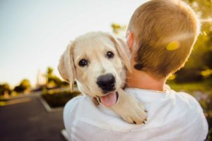 Man carries Labrador retriever puppy. Buying CBD oil for your dog: Start by looking for veterinarian recommendations.