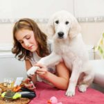 Reduce grooming stress by getting the dog used to being around grooming equipment.