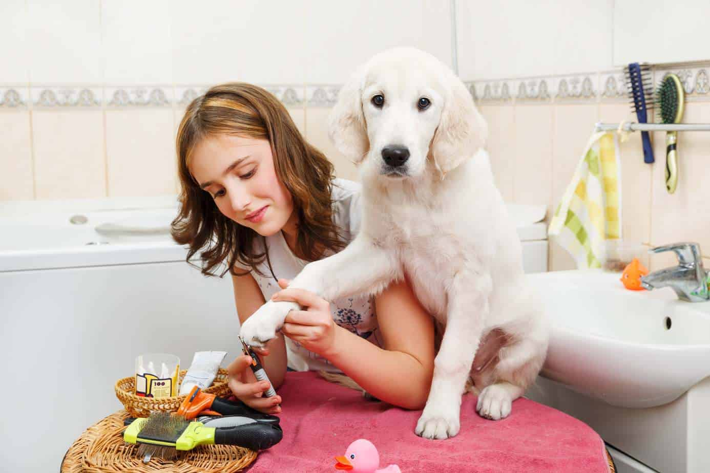 Woman clips dog's nails. Reduce grooming stress by getting the dog used to being around grooming equipment.
