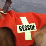 Following natural disasters, dogs often play a significant role both by serving as search and rescue dogs and by providing emotional support.