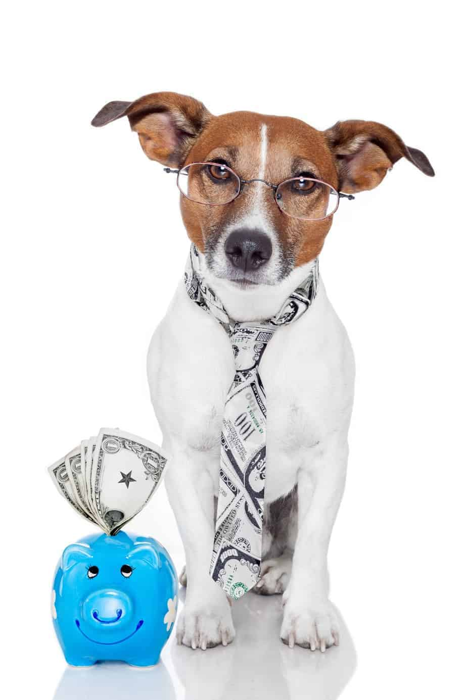 Jack Russell terrier wearing a tie and sitting next to a piggy bank stuffed with money. Thrifty dog owner: Save money by buying food in bulk and making your own treats and toys.