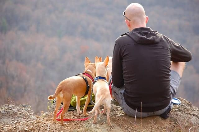 Man and two dogs sit at dog-friendly campsite. Go camping with your dog.