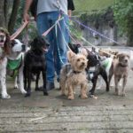 Depending on your needs and budget, dog walkers can bring your pup on a solo walk or include your dog with a group.