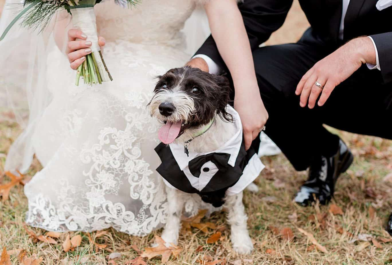 Bride and groom pose with dog in a tuxedo for a dog-friendly wedding.