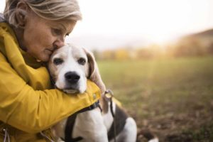 Woman cuddles with senior beagle. As your dog ages and becomes ill, it becomes important to evaluate your dog's quality of life using a know when to put your dog down checklist.