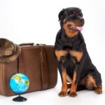 Rottweiler sits with a suitcase and a small globe. With just a little bit of planning, you and your pooch will have tons of fun on your dog-friendly summer vacation.