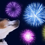 Photo illustration shows dog fireworks fear
