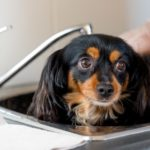 Low maintenance dogs require occasional bathing and brushing.