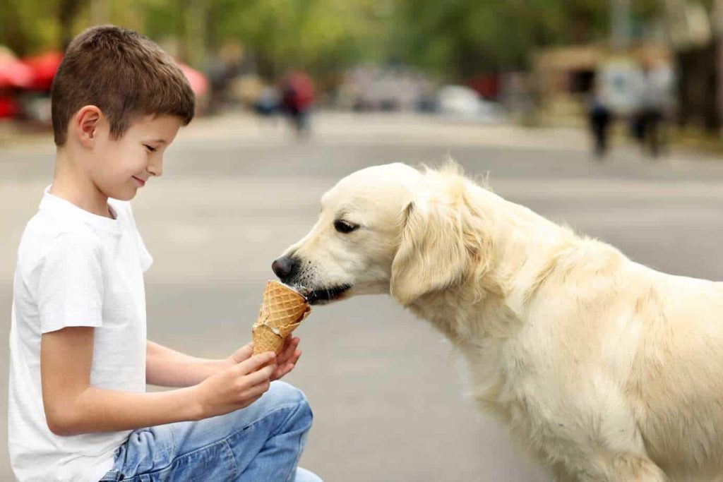 Boy feeds golden retriever ice cream.