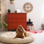 Planning to dedicate space in your home for your dog? Consider these dog room ideas.