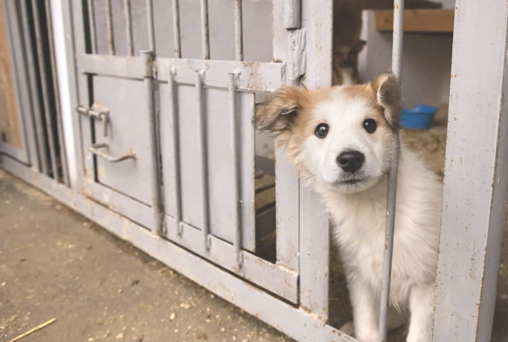 Small white dog waits at animal shelter to be adopted. Help animals in need by donating your time, money or car.