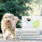 Smart tech for dogs: Feeders, smart senors and more