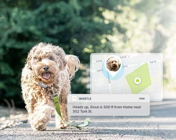 smart pet tech tracker