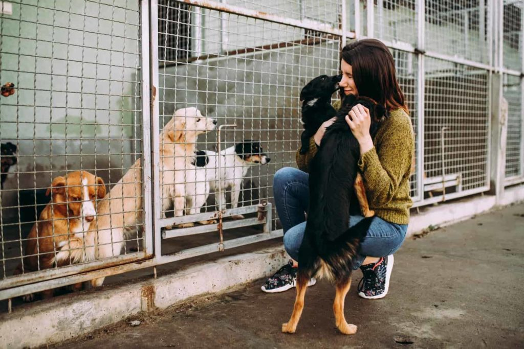 Woman hugs two dogs at a shelter. When you adopt a shelter dog, find out as much about that dog as you can (i.e. his personality, background history, health history, etc.)