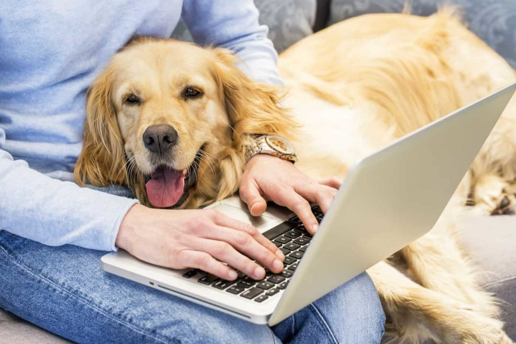 Woman works on laptop while cuddling with friendly golden retriever. Being a digital nomad dog owner requires extra planning and preparation, but traveling with your dog can be a rewarding experience.