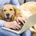 Being a digital nomad dog owner requires extra planning and preparation, but traveling with your dog can be a rewarding experience.