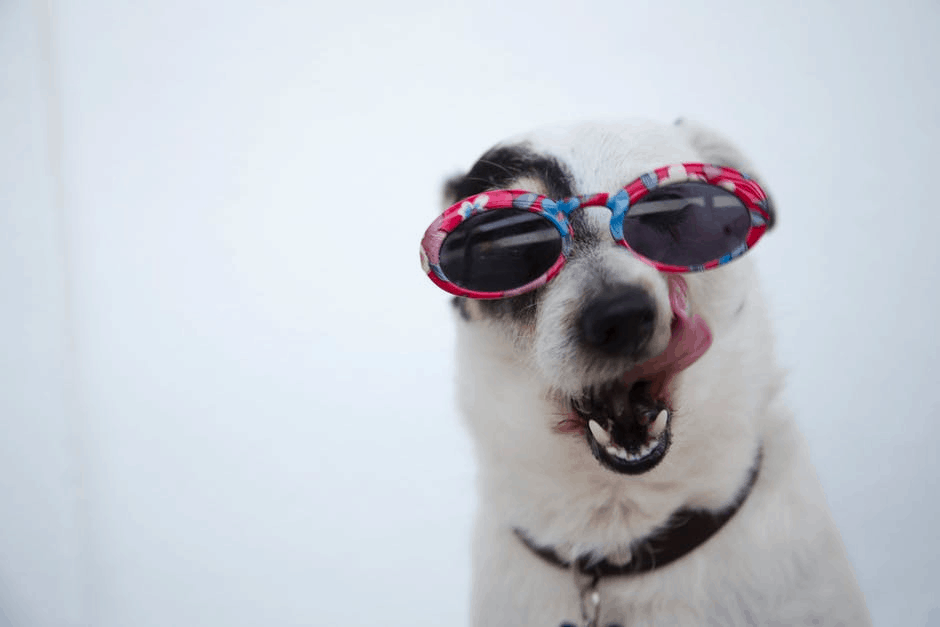 Dog wearing sunglasses enjoys pet-friendly cruises.