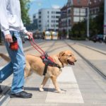 Service dog training requirements include training to pass obedience and public access tests.
