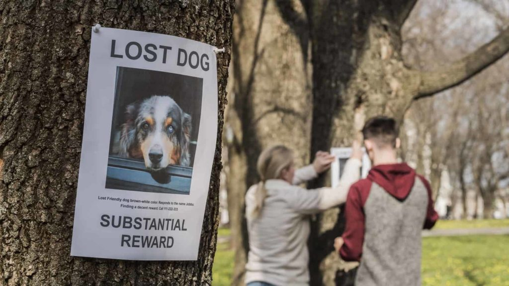 Couple puts up lost dog posters. Findshadow creates a personalized, step-by-step plan on how to use the app and other resources to locate your dog and bring him home.