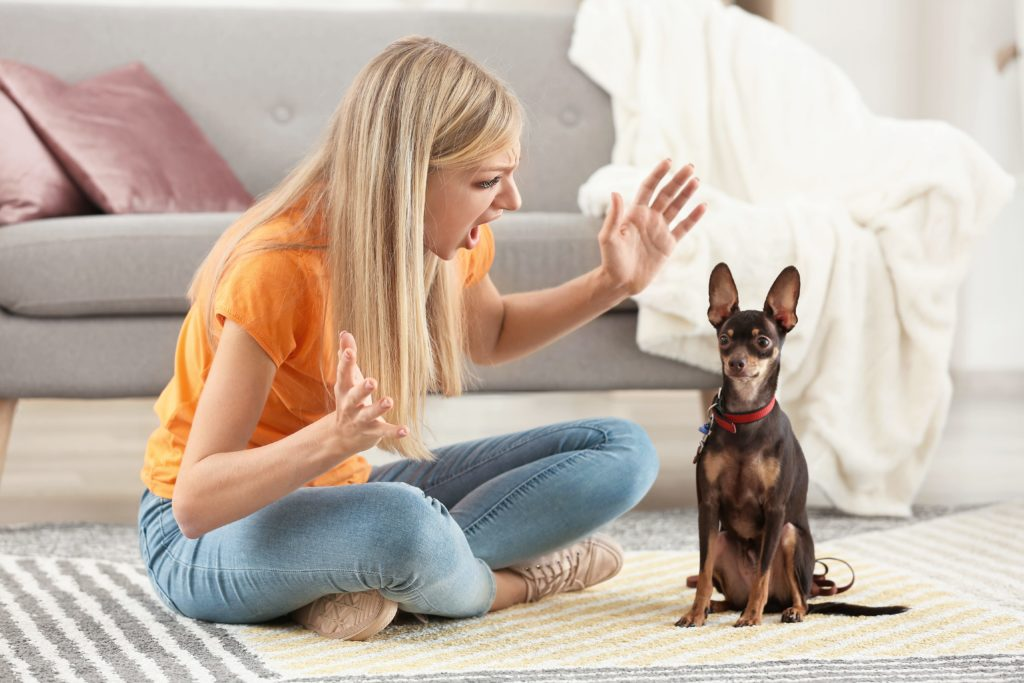 Angry woman yells at her miniature pinscher. Your tone of voice and volume play a significant role in your dog's development and how you bond. Yelling at your dog can make your dog nervous and fearful.