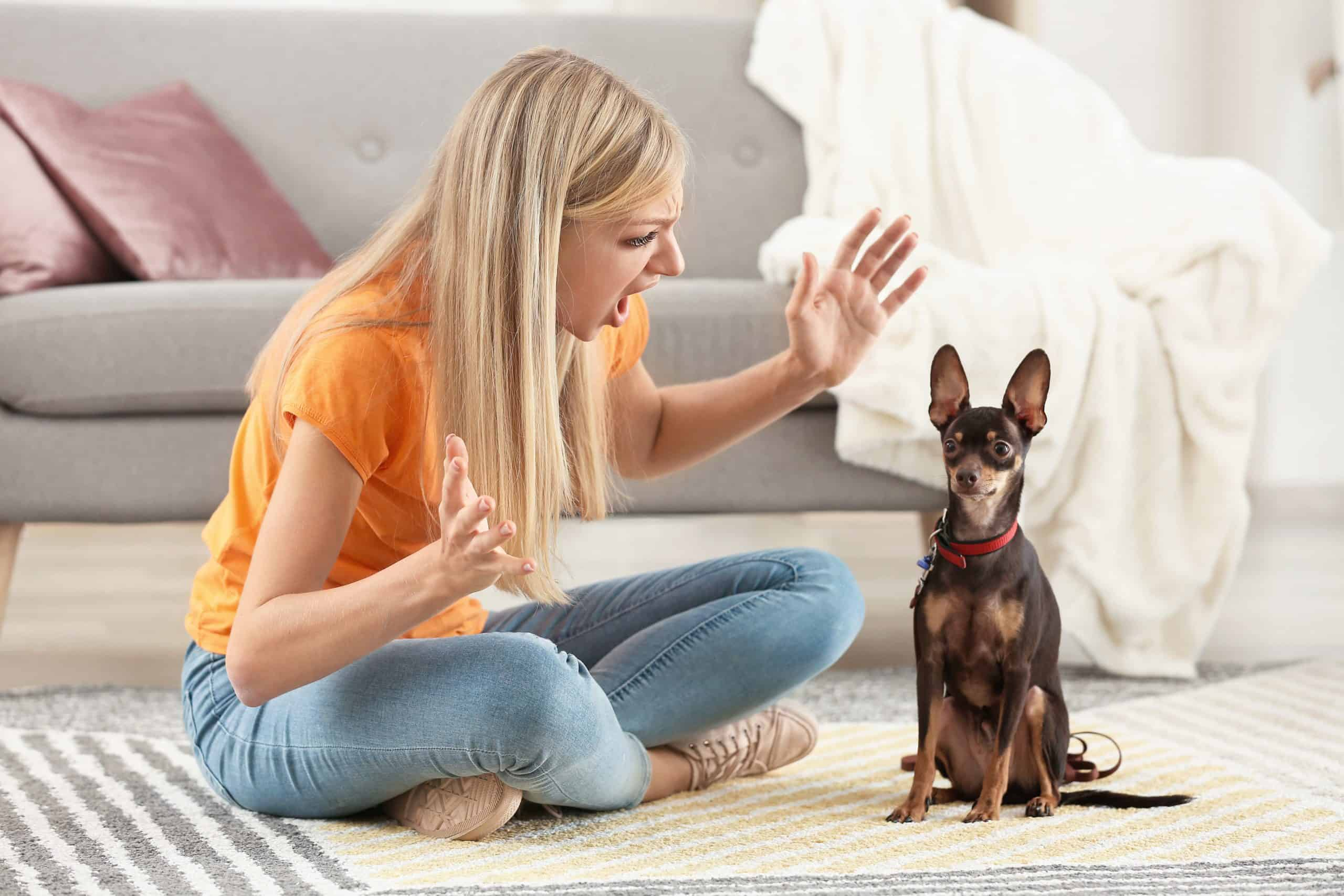 What You Should Know About Training Your Dog