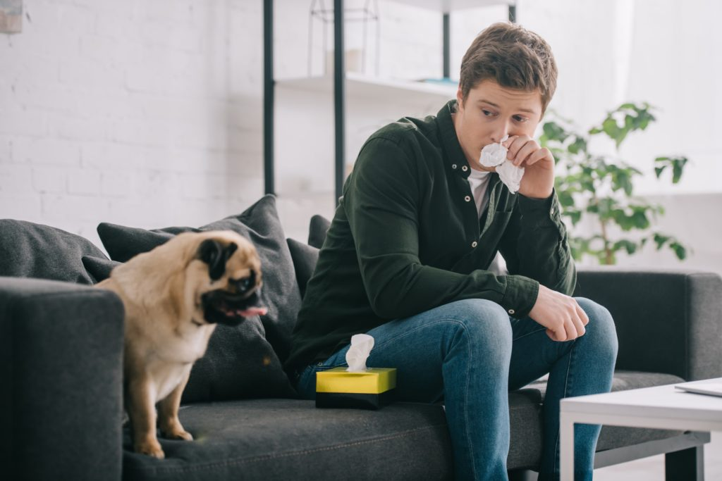 Man has allergic reaction to pug. What many of us don't realize is that allergies can be managed – you don't have to consider giving up on the family dog. Start by identifying the problem.
