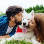 Man and woman both give a white samoyed a kiss. Dog co-parenting allows dog owners to split costs and allows the dog to be with the owner who has the most free time to give.