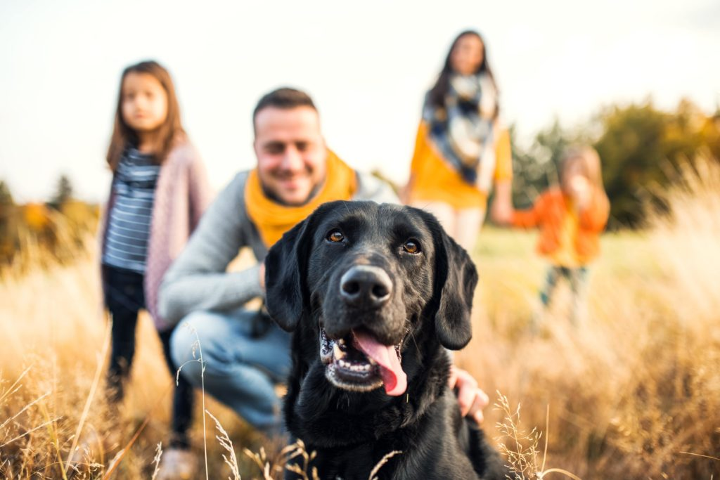 Happy black Labrador retriever with family. Dogs help owners be happier and healthier. Research shows having a dog makes people live longer, feel less stress, and experience fewer health issues.