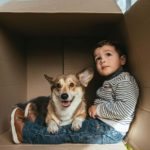 Corgi sits on little boy's lap in a box. Toddlers and dogs can become best friends with proper training and supervision.