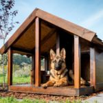 German shepherd lounges in a dog house. A doghouse provides a sense of security, a run or dog fence helps your dog exercise, and a wash station allows you to keep them clean.