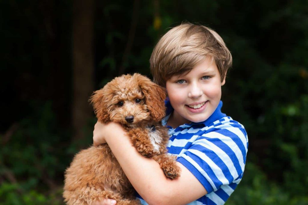 Boy hugs miniature poodle. Poodles are great family-friendly dog breeds.
