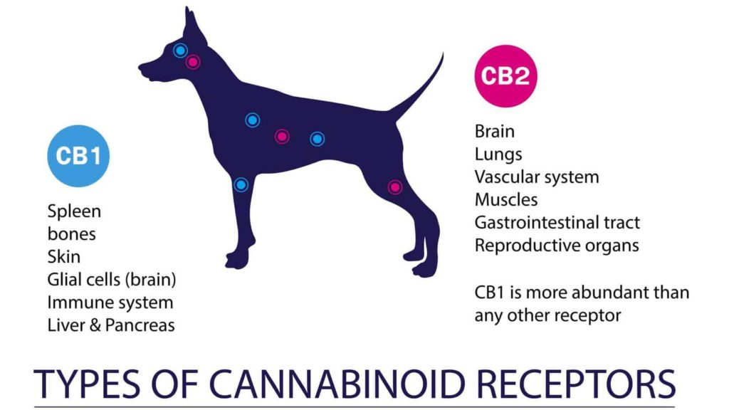 Graphic explains how CBD oil for dogs provides health benefits.