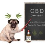 CBD oil for dogs can help them relax because it has a calming effect, which can make your dog more sociable.