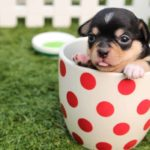 Puppy plays in cup. Five essential nutrients are critical to ensuring your puppy grows and thrives. Poor nutrition can lead to stunted growth, terminal injuries, and fatal illnesses.