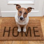 Jack Russell terrier sits on welcome home mat. House hunting as a dog parent poses challenges. Many rentals won't take pets or charge high fees. Do your research and take your time to find the right home.