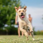 Regular exercise can reduce the risks of obesity and is key to maintaining your dog's health.