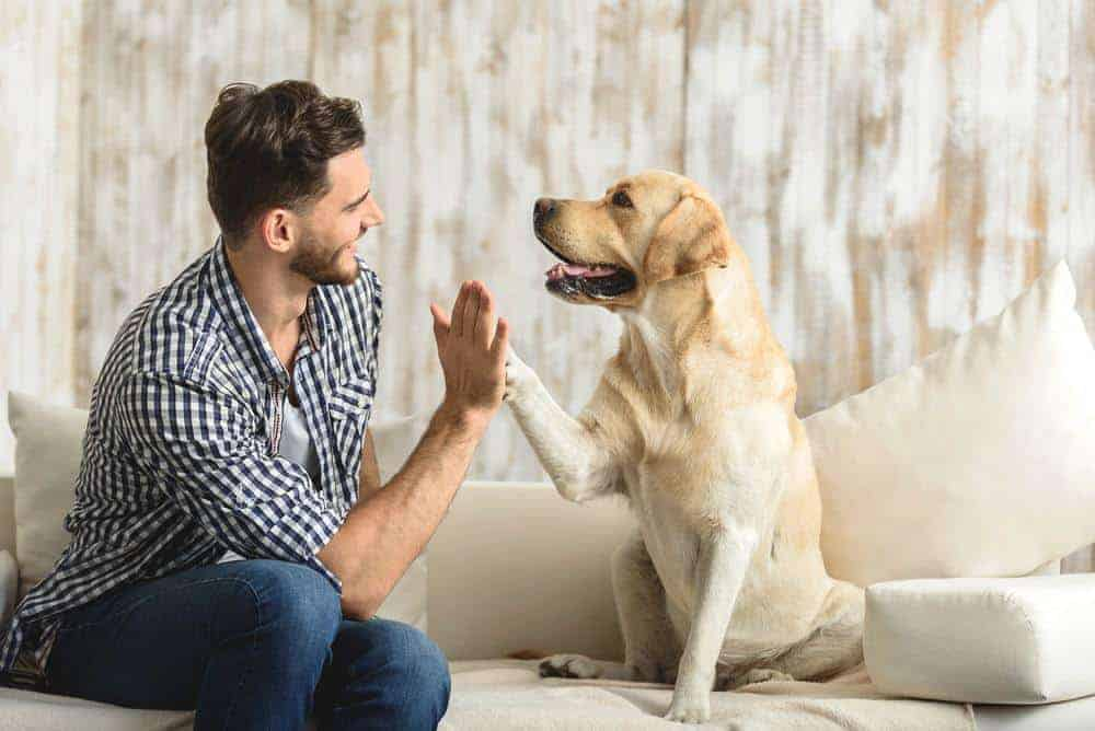 Man pets Labrador Retriever. Maintaining your dog's health throughout their lives can be a challenge, but knowing the right strategies to use can make this task easier.