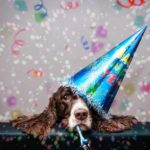 Springer Spaniel wears a New Year's party hat. Whether it's making a new friend, eating healthier, or getting more exercise, use these seven New Year's goals with your dog for a healthier year in 2020!