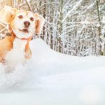 Don't hibernate! From walks and baking treats to creating puppy art. Discover 10 winter dog fun activities you can do with your dog.