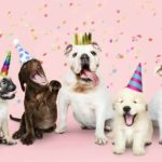 Celebrate dog milestones like your pup's birthday.