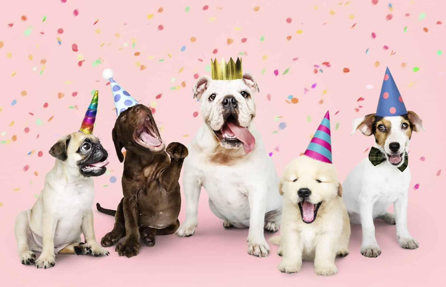 Dog milestones: Birthday, Gotcha Day, Christmas and more