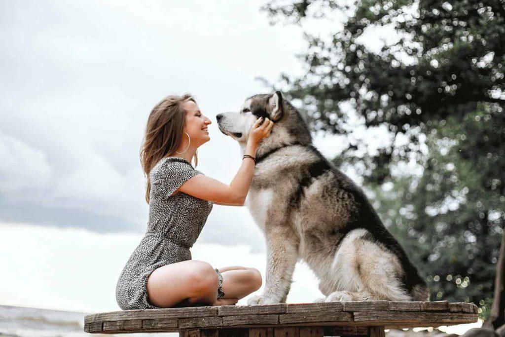 Woman pets large Siberian Husky.