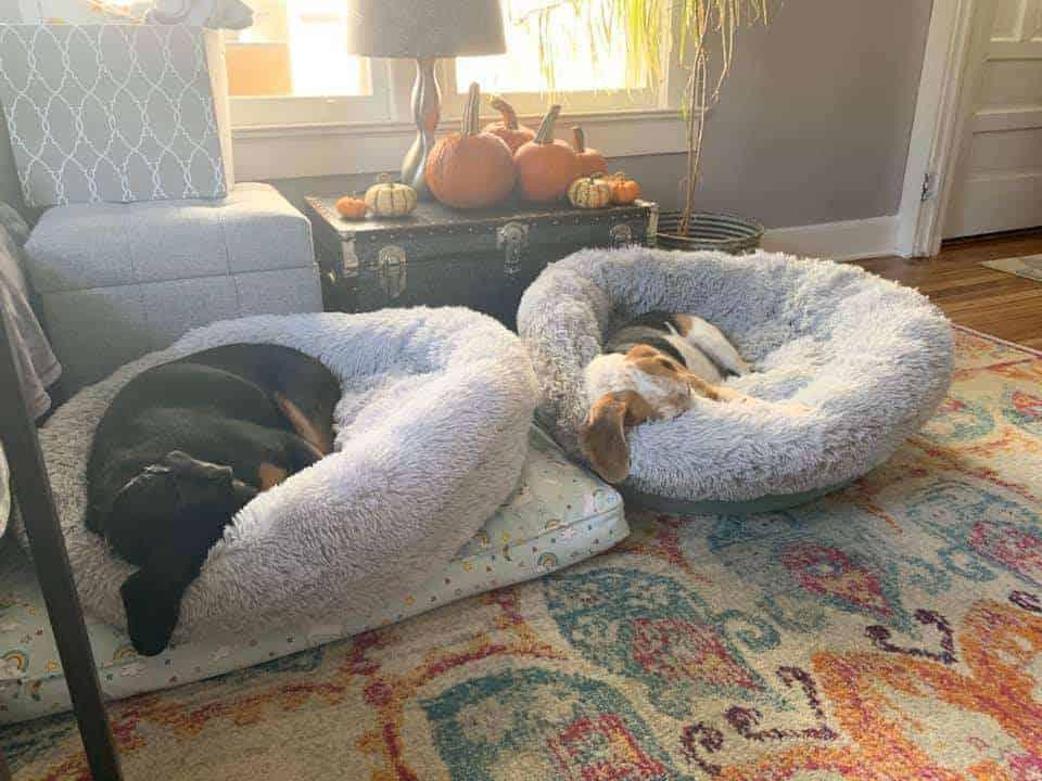 dog sleep behavior