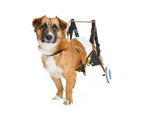 Make simple modifications to help your pet using a dog wheelchair.