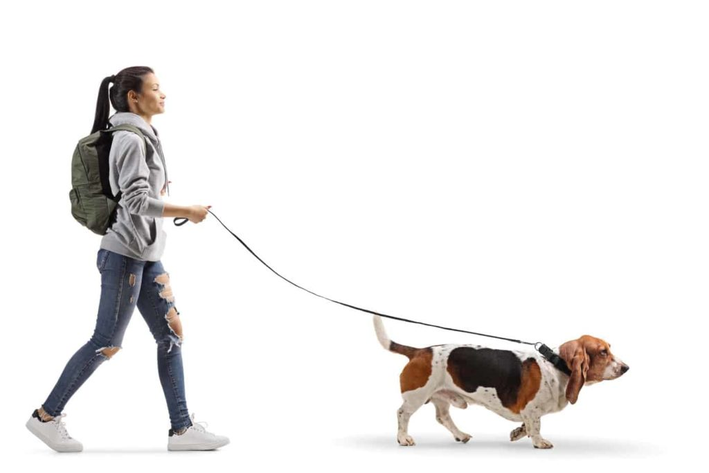 Teen walks basset hound. Dogs benefit teen health by reducing depression, helping prevent allergies, encouraging physical activity, and reducing stress and blood pressure.