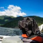 Use dog boat safety tips to keep your pup safe and secure. Use life jackets, follow all dog laws, and provide a safe space for your dog to relax onboard.
