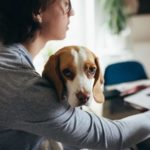 Quarantine with your dog: Woman holds beagle on her lap while typing on a computer.