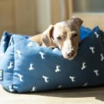 Dog lounges on dog bed. When buying a dog bed consider the same factors you use when buying a mattress for yourself.