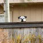 Make your dog neighbor-friendly. Listen to their concerns, especially if your dog barks at them nonstop, dig holes, or escapes into their yard.