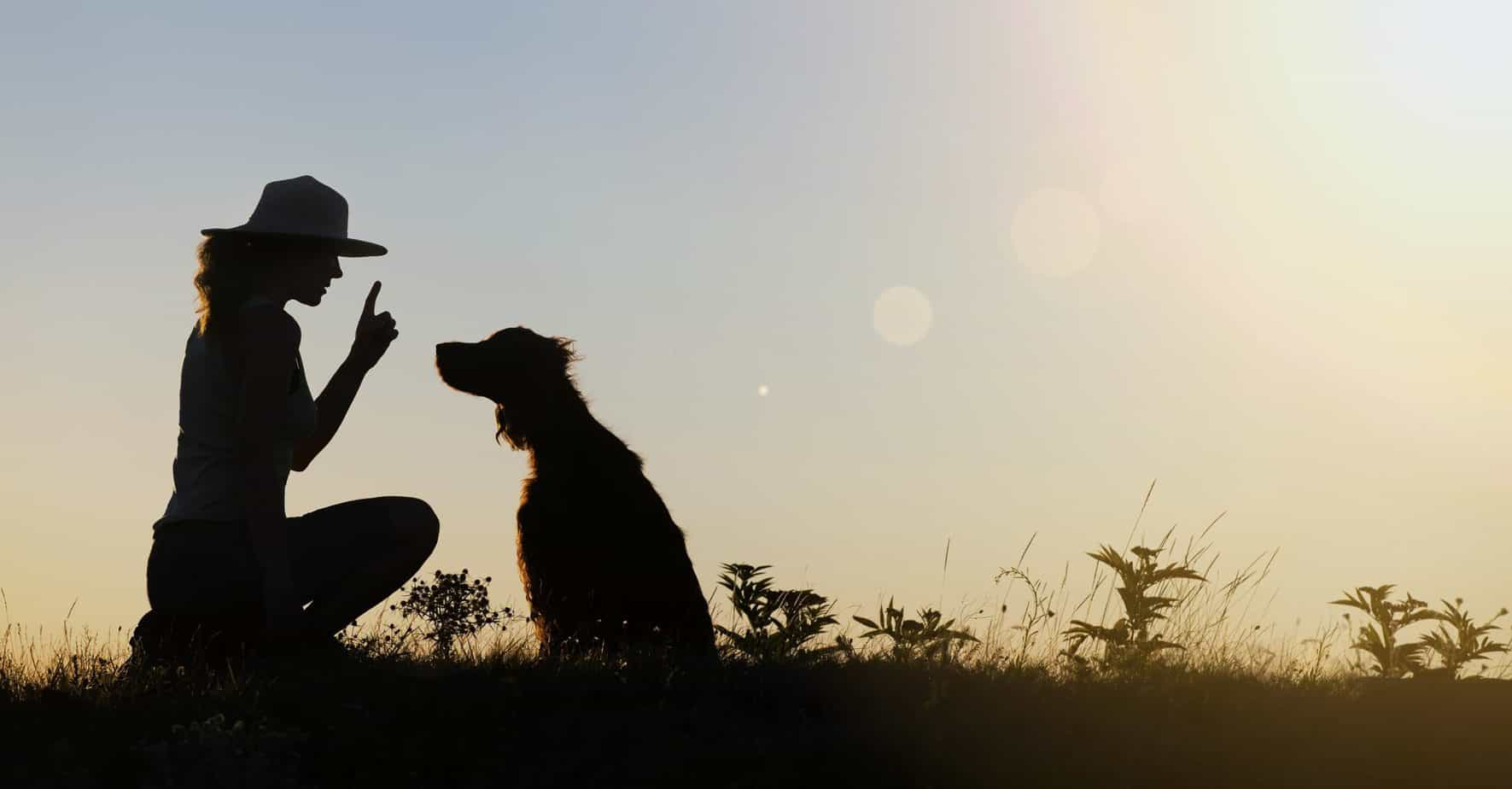 Professional dog trainers use strategies and tactics that fit the unique personality of your canine companion.